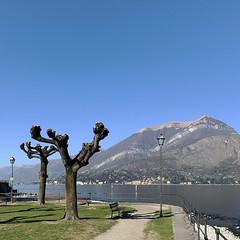 (Paolo Cozzarizza) Tags: italia lombardia como bellagio panorama acqua riflesso erba alberi