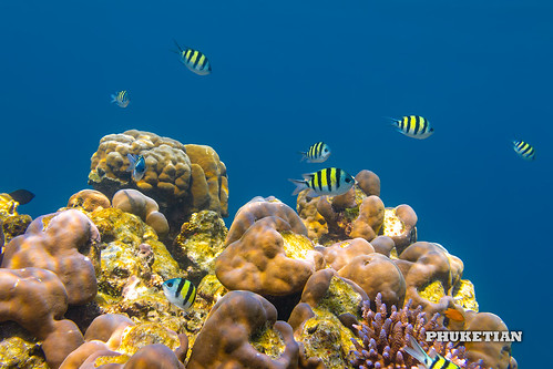 Coral reef of the Surin islands, Thailand, Indian Ocean