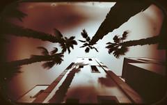 Trees and shadows (batuda) Tags: pinhole obscura stenope lochkamera analog analogue altoids barkleys tin mediumformat 6x9 paper ilford ilfospeed wide wideangle perspective architecture buiding house palm shadows crete summer neodymium