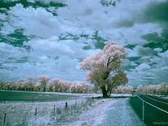 Outside Stockinbingal, storm clouds forming. (i-lenticularis) Tags: australia contaxg21f28 newsouthwales ricohgxra12irsensor infrared landscape outsidestockinbinal ricohgxra12ir ruralscene infraredfalsecolour