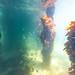 St Leonards Pier Underwater-37