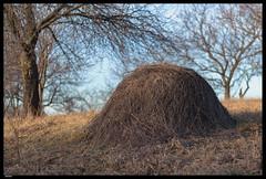 Roz 2019 (6) (***RM***) Tags: czechrepublic moravia zidlochovice country nature walk winter february nikon d850 nikkor 2470mm