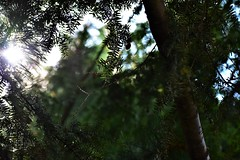 Gazing Through The Trees (filmcrazy1014) Tags: nikon outdoor wildlife nature darkcolors sky tree trees leaves leave branch branches sulight sunbeam contrast dark forest woods magical mysterious greenleaves green black blue white