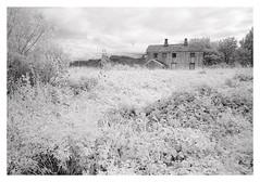 (2018) (phamnes) Tags: norway austbø summer 135film epsonv600 35mm infraredphotography irfilm infraredfilm infrared superpan200 rolleisuperpan rollei sigma20mm sigma sigmalens slr nikonf301 nikon