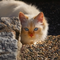 I don't want to go home yet ! (FocusPocus Photography) Tags: tofu dragon katze kater cat chat gato tier animal haustier pet
