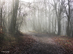 On we go (mark.griffin52) Tags: england buckinghamshire wendoverwoods mist countryside beechwood beech trees forestpath forest woodland landscape