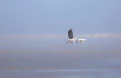 Sky walk (Zoom58.9) Tags: fog people dogs beach landscape nature waves blue walk nebel menschen human hunde strand landschaft natur wellen width weite blau canon eos 50d outside draussen seascape seelandschaft europe europa germany deutschland borkum island insel