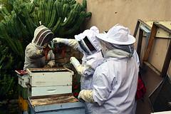 DSC_9761-61 (jjldickinson) Tags: nikond3300 107d3300 nikon1855mmf3556gvriiafsdxnikkor promaster52mmdigitalhdprotectionfilter longbeach bixbyknolls longbeachbeekeepers outreach class beeprepared insect bee honeybee apismellifera hive hiveinspection dickbarnes