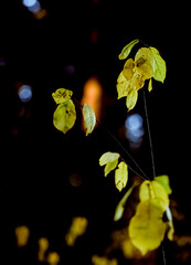 illuminated (my analog journey) Tags: 500cm fujiproviardpiii provia100f hasselblad sonar4150c slidefilm branches tree illuminated ilovefilm filmisawesome filmsmellsgood filmshooter wwwmovformatcom mov ©bymikemov lastlight sunlight sunset inthewoods intheforest forest nature naturallight