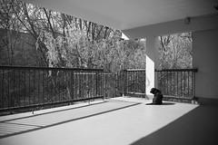 Berlin, Am Berl - Schatten und Hund (tom-schulz) Tags: eos6d ef2890 rawtherapee monochrom bw sw berlin thomasschulz balkon hund schatten geländer