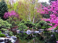 Japanese Garden (Colorado Sands) Tags: us dbg pond spring japanesegarden denverbotanicalgardens denver colorado garden botanicalgardens denverbotanicalgarden blossoms blossoming usa gardens sandraleidholdt denverbotanicgardens tree
