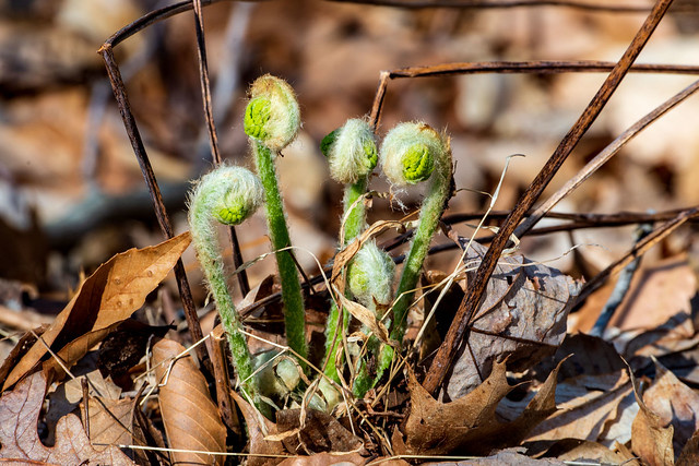 Hoosier National Forest - Knobstone Trail - April 10, 2019