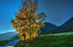 Luce del tramonto (giannipiras555) Tags: tramonto albero luce colore collina cielo altoadige rasun sunset panorama paesaggio capella landscape autunno foliage