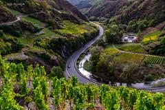 The winding road (Gijs Rijsdijk) Tags: ahrvalley arhweiler dernau germany grapes mayschoss rotweinwanderweg valley wine arhtal autumn beautiful colorful eiffel hiking hikingtrail scenery vineyard winetasting ©2019gijsrijsdijk