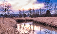 Reflections in the Stream (robinlamb1) Tags: landscape trees sky cloud stream water reflections grass tallgrass