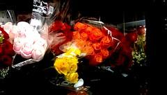 Supermarket roses! (Maenette1) Tags: supermarket roses colorful jacksfreshmarket menominee uppermichigan flicker365 allthingsmichigan absolutemichigan projectmichigan