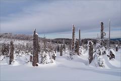 Verträumt /dreamy (ludwigrudolf232) Tags: winter bäume schnee siebenstein himmel wolken