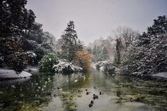 Victoria Park, Bath (Nige H (Thanks for 15m views)) Tags: nature landscape trees winter snow pond bath somerset england victoriapark ducks duckpond
