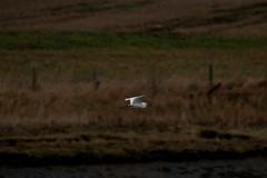 IMG_5228 (monika.carrie) Tags: monikacarrie ythan wildlife scotland