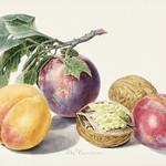 Fruits by Michiel van Huysum (1714-1760). Original from The Rijksmuseum. Digitally enhanced by rawpixel. thumbnail