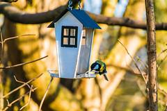 My home (Maria Eklind) Tags: dof ribban skåne malmö strand birds sweden animal fågel beach depthoffield skånelän sverige se