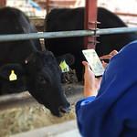 クラウド型 牛群管理システムの写真