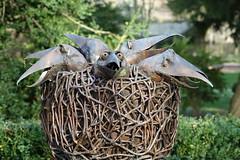 In the nest (hedgehoggarden1) Tags: nest chippenhamhallgardens eastanglia uk cambridgeshire sonycybershot gardens sony