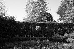 Regent's Park (fabiolug) Tags: tree scale manicured garden park branches trunk light shadow line lines symmetry nature regentspark london leicammonochrom mmonochrom monochrom leicamonochrom leica leicam rangefinder blackandwhite blackwhite bw monochrome biancoenero leicaelmarit28mmf28asph elmarit28mmf28asph elmarit28mm leicaelmarit28mm 28mm elmarit leicaelmarit wide wideangle
