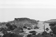 Broken Hill - Torrey Pines, California (MbopPhotos) Tags: torrey pines broken hill pine tree ocean cliff rock bw black white olympus om10 kodak trix 400 california san diego la jolla