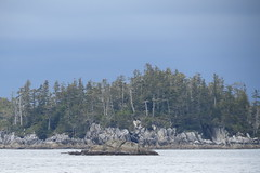 IMG_6417 (Forestplanet) Tags: great bear rainforest 2017