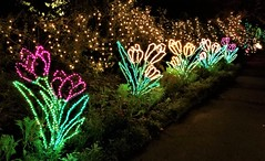 Bellingrath Magic Christmas in Lights (ciscoaguilar) Tags: christmas alabama theodore lights bellingrath