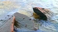 crabs on the rocks (zenziyan) Tags: crab rock shell marine sea seaside animal yengeç crawl foça