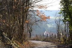 Au bout du chemin (Croc'odile67) Tags: nikon d3300 sigma contemporary paysage landscape brume mist arbres trees chemin