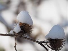Winter Art (Ostseetroll) Tags: deu deutschland geo:lat=5404287871 geo:lon=1070129069 geotagged gronenberg scharbeutz schleswigholstein winter kunst art makroaufnahme macroshot olympus em10markii