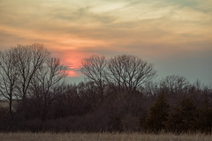 Tree Line Sunset 4 (thefisch1) Tags: sunset sky tree winter bare pasture