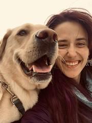What a glorious selfie || yogi - Labrador Retriever (Samamammals) Tags: labradorretriever purebreds dogbreeds doggroups sportingdogs huntingdogs gundogs dogboarding petboarding petsitting dogsitting samammals 247 petcare 247petcare