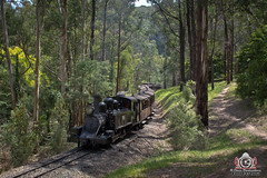 The New Oily (R Class Productions) Tags: steam train puffing billy railway victorian railways na baldwin locomotive narrow gauge forest heritage vintage dandenongs oilburner 14a