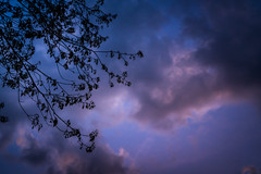 Foreboding Sky (John Brighenti) Tags: outside outdoors backyard evening dusk night dark spring april rockville maryland md montgomery county twinbrook suburb suburban town trees sky branches moody atmospheric sony alpha a7rii ilce7rm2 ilce nex emount femount tamron 2875mm zoom wide angle lens clouds purple lavender blue pink maple leaves sprouts buds tamron2875