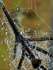 gocce di rugiada (Gigliola Spaziano) Tags: rugiada nature drops explore