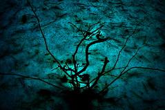 Abstraction. (ALEKSANDR RYBAK) Tags: изображения абстракция снег куст ветки хвоя свет природа зима images abstraction snow bush branches needles shine nature winter
