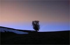 ...colors... (shallowcreek) Tags: österreich upperaustria hausruckviertel landschaft landscape farben colors baum tree himmel sky schnee snow wiese meadow