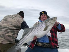 Striped Bass (mddnrfish) Tags: chesapeake bay