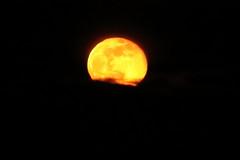 Reluctant Full Moon,Aberdeen_Feb 19_760 (Alan Longmuir.) Tags: grampian aberdeen misc sky moon reluctantfullmoon night