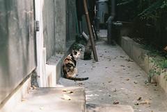 (YL.H) Tags: cat 台中 貓 底片 nikon f801s film analog taiwan
