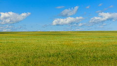 Summer field and sky (man_from_siberia) Tags: summer august field sky landscape siberia поле небо лето август сибирь canon eos 200d dslr canoneos200d canon200d canonrebelsl2 canonef40mmf28stm pancakelens