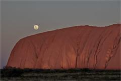 The Uluru . Outback (:: Blende 22 ::) Tags: fullmoon bloodmoon sunset after moon evening australia australien nothernterritory outback olgas katatjuta uluru ayersrock redrocks redcentre rocks bluesky canoneos5dmarkiv ef2470mmf28liiusm