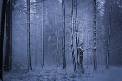 Frozen and broken (Petr Sýkora) Tags: les sníh zima winter snow tree forest nature cold broken frozen czech