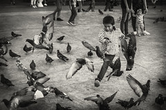2019 Playing with the pidgeons (jeho75) Tags: sony ilce 7m2 zeiss mexico child playing pidgeons merida mesoamerica plaza black white street scene