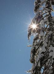 Snowart (KronaPhoto) Tags: 2019 natur vår