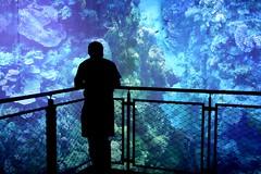 underwater world (Wackelaugen) Tags: silhouette gasometer pforzheim germany europe 360° panorama 360°panorama asisi yadegar yadegarasisi underwater greatbarrierreef korallenriff australia coralreef canon eos photo photography stephan wackelaugen